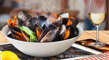 Cozza Selvaggia di Marina di Ravenna. Dal 25 al 27 giugno la festa, ecco dove trovarla al ristorante e sui banchi del pescato - ravennanotizie.it