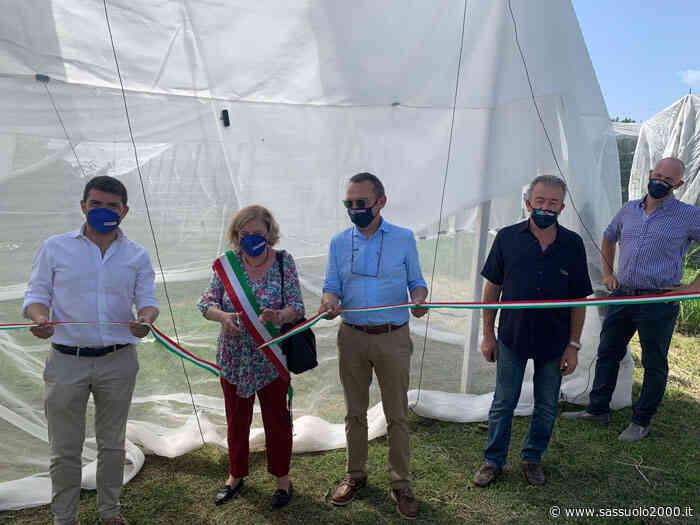 Agricoltura: ricerca e innovazione a difesa delle ciliegie di Vignola - sassuolo2000.it - SASSUOLO NOTIZIE - SASSUOLO 2000