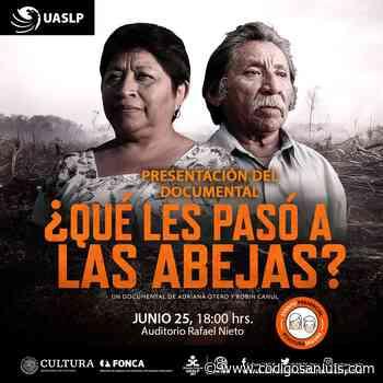 Cine Club Universitario presenta el Documental ¿Qué les pasó a las abejas? - Código San Luis