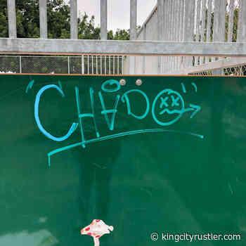 King City Skate Park grand reopening carries on despite vandalism - King City Rustler