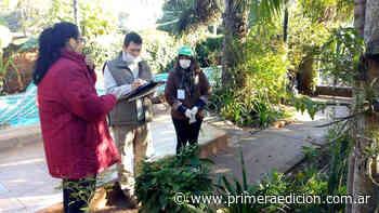 Monitorean y retiran ejemplares de caracol gigante africano en Posadas - Primera Edicion