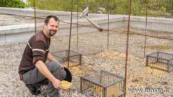 Environnement : Ces animaux sauvages chassés d'Epernay par le garde-chasse - L'Union