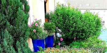 Naturnahe Gärten in Wesseling: Koalition will mit Wettbewerb Schottergärten reduzieren - Kölnische Rundschau