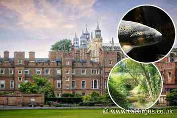 Trout could be 'imperilled' if Eton College plans go ahead