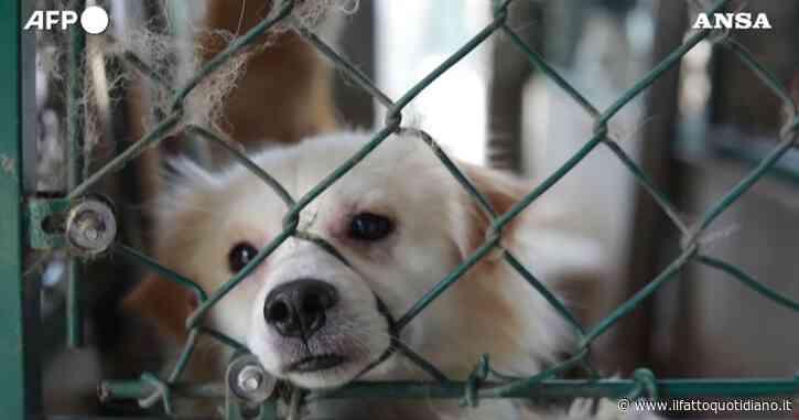 In Cina il monaco buddista che regala una nuova vita ai cani randagi: ne ha già salvati 8000 – Video