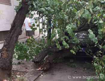 Cadono due alberi in due zone a Palermo, uno si schianta su un'auto, l'attacco della Lega (FOTO) - BlogSicilia.it