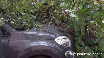 Palermo, crollano due alberi a Villa Niscemi e in via Terrasanta: uno finisce su un'auto - Giornale di Sicilia