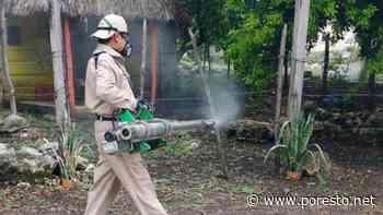 Refuerzan medidas preventivas contra el dengue en Campeche - PorEsto