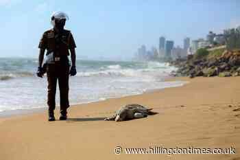 Turtle carcasses wash ashore in Sri Lanka after ship fire - Hillingdon Times