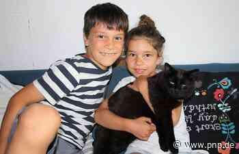 Kater Karl kehrt zu seiner Familie zurück - nach fast drei Jahren - Passauer Neue Presse