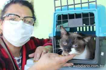 Barueri castra 144 animais em mutirão exclusivo para protetores - WebDiario