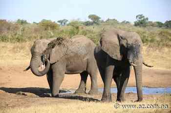 Exploration bedroht Elefanten - Natur & Umwelt - Allgemeine Zeitung