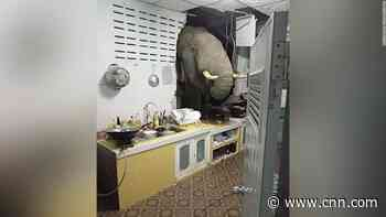 Elephant crashes into a woman's home in search for food, as natural habitats shrink