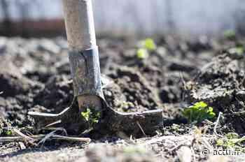 La métropole de Lille veut ouvrir le parc Mosaïc aux jardiniers - actu.fr
