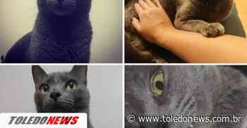 Gato de estimação está desaparecido no Jardim La Salle - Toledo News
