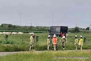 24-jarige trucker wordt onwel en parkeert gevaarte in weide vol koeien