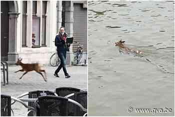 Reebok die opdook bij heropening terrassen tweemaal aangereden in enkele uren tijd - Gazet van Antwerpen