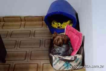 Final feliz: cadelinha Nescau é encontrada e volta para casa, no Parque Danielle - OBemdito