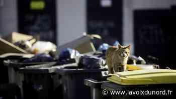 Hautmont: une campagne de stérilisation des chats errants bientôt lancée - La Voix du Nord