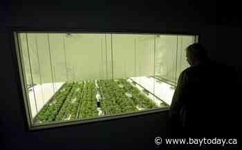 Australian pot company Little Green Pharma buys Canopy Growth facility in Denmark