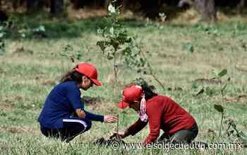 Jóvenes buscan reforestar los cerros de Tepoztlán - El Sol de Cuautla
