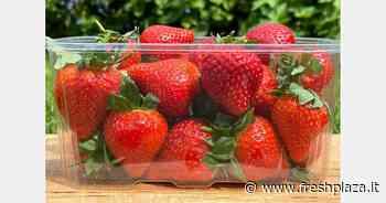 Contenitori 100 per cento rPET per la stagione dei piccoli frutti - Freshplaza.it