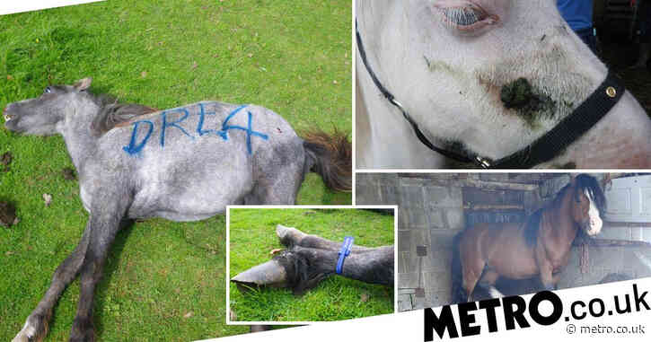 Farmer avoids jail despite neglecting dozens of horses for years