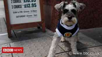 In pictures: Scotland fans prepare for key Euros match with Croatia