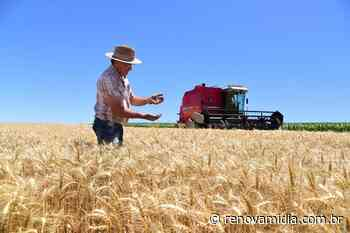 Trigo no Rio Grande do Sul: plantações podem crescer 20% em 2021 - RENOVA Mídia