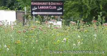 Pictured before and after - Roadsides and roundabouts in Solihull left to grow wild for the bees - Birmingham Live