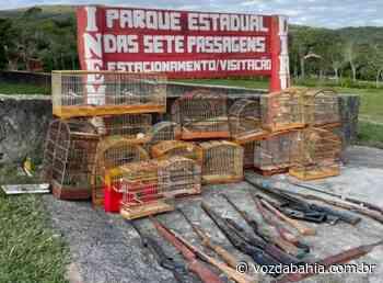 Operação contra crime ambiental em Miguel Calmon e Jacobina resgata mais de 70 pássaros - Voz da Bahia