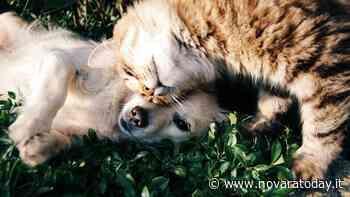 Avvelenamenti: a Novara un corso gratuito per i proprietari di cani e gatti - Novara Today