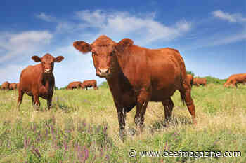 Beef supply chain emissions can be reduced by more than 30% by 2030