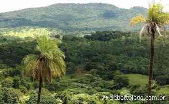 Tocantins reduz 34% do desmatamento no Estado em 2020 - Cleber Toledo