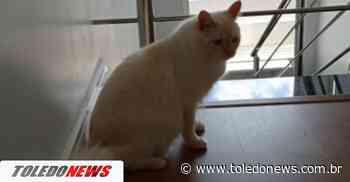 Gato desaparece no Jardim Anápolis, em Toledo - Toledo News