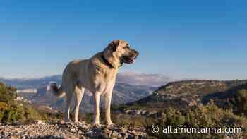 Quais são os riscos de levar cachorro para a montanha? - Alta Montanha