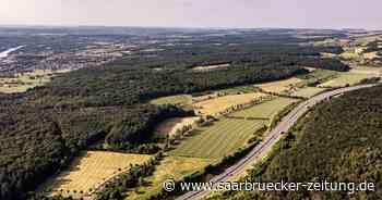 Urwald Saarbrücken als Vorbild: Grüne wollen Wildnisgebiet in Perl - Saarbrücker Zeitung