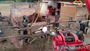 Azzano Decimo, cavallo di 29 anni finisce nella vasca liquami: salvato dai pompieri - Nordest24.it