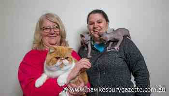 Panthers to host kitties at annual Cat Society cat show - Hawkesbury Gazette