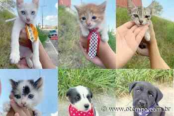 Tempo de Pet: confira os animais para adoção em Betim - O Tempo