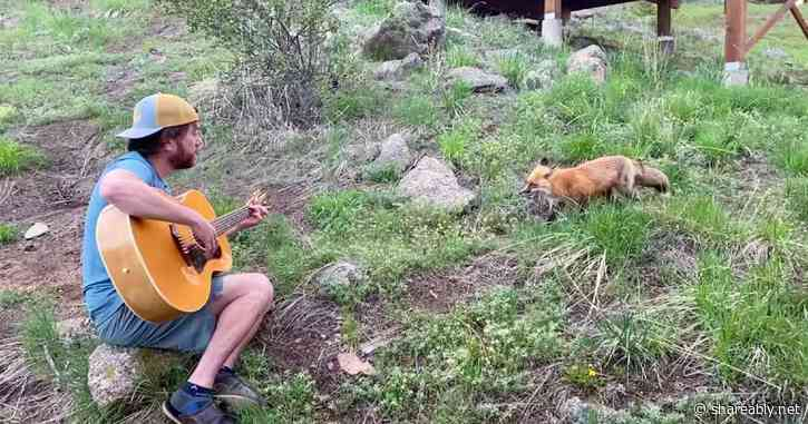 Man plays the guitar outside attracting a wild fox that can't get enough