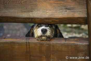 Ab August ist in Schwaikheim mit Hundekontrollen zu rechnen - Schwaikheim - Zeitungsverlag Waiblingen