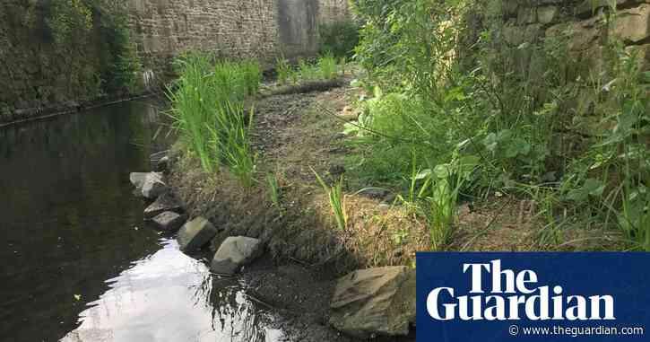 'Mucky Beck': restoring and rewilding Bradford's river