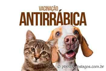 Vacinação antirrábica será nesta quarta em São Cristóvão, em Cabo Frio - Plantao dos Lagos
