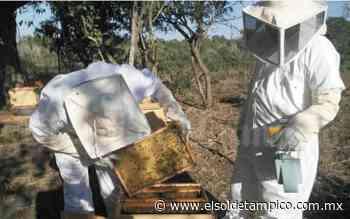 Apicultores en crisis por la sequía - El Sol de Tampico