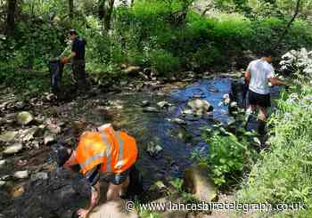 Over 10 bags of litter collected from Tinker Brook in spring clean up