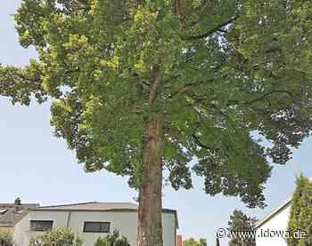 Baumschutzverordnung - Ein Landshuter Baumspaziergang - idowa