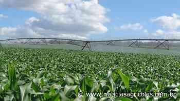 Em Cristalina/GO milho de sequeiro deve produzir metade do milho irrigado e estimular investimentos - Notícias Agrícolas