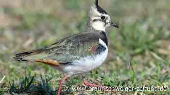 Mehr Vögel in Deutschland vom Aussterben bedroht