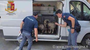 Traffico internazionale di cani, furgone bloccato sulla complanare di Senigallia - Centropagina